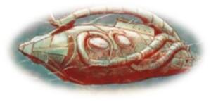 nemonautilus